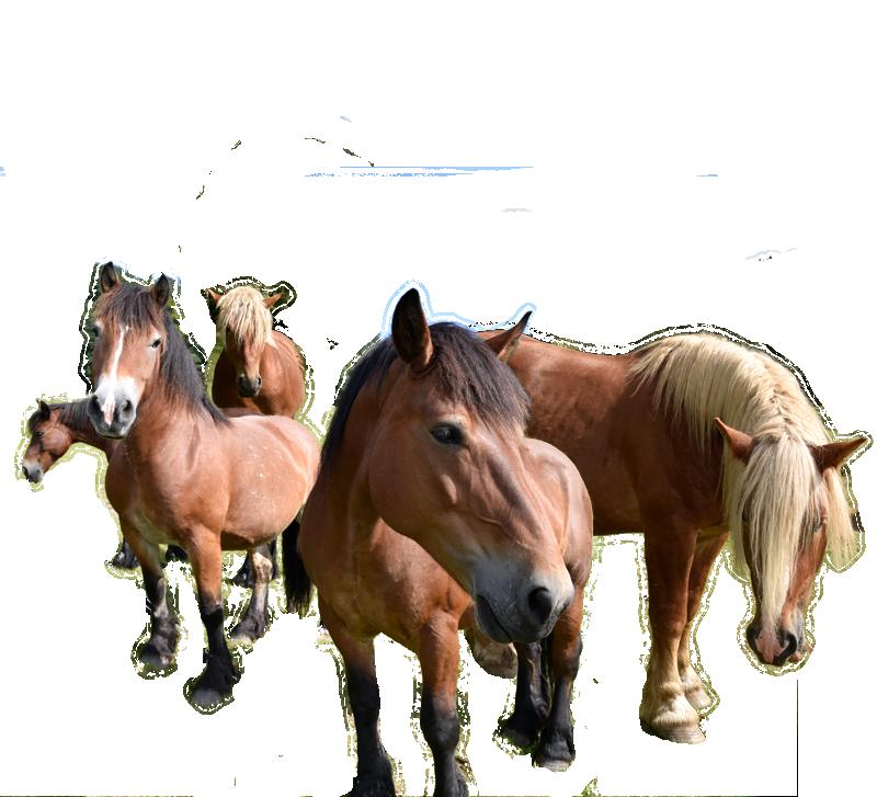 pferde_landwirtschaft_eck